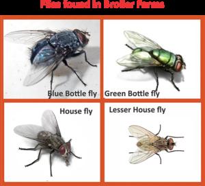 comprehensive fly control programme nutricon. Black Bedroom Furniture Sets. Home Design Ideas